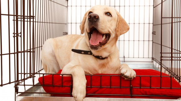 National Pet Month: How to Choose the Best Crate Tray